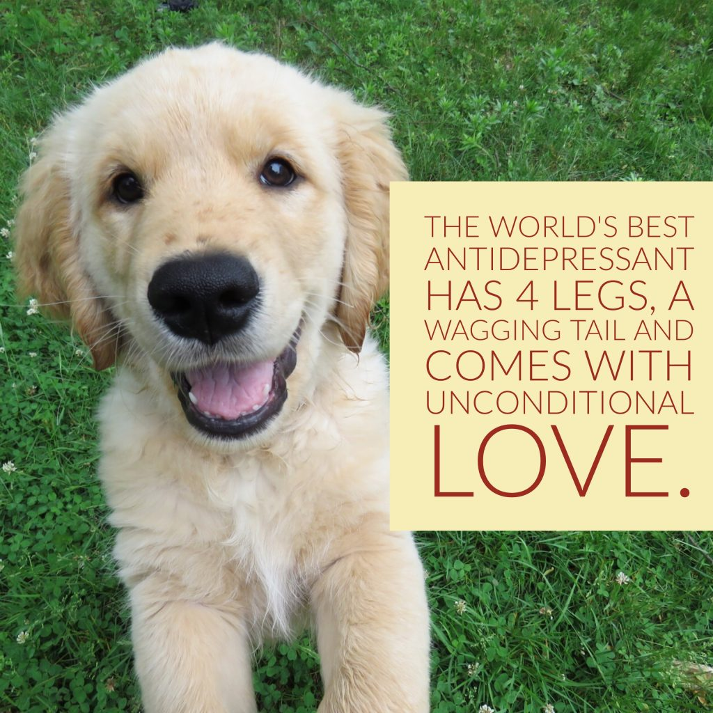 The world's best antidepressant has 4 legs, a wagging tail, and comes with unconditional love.
