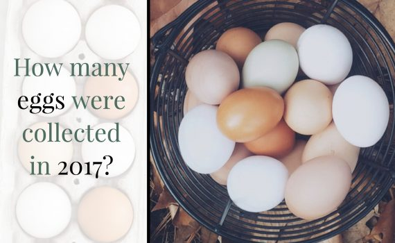 How many eggs where collected in 2017?