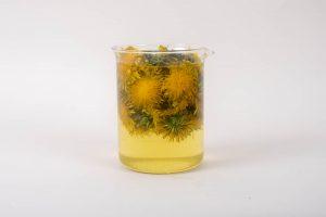 Dandelion flowers steeping in water to create a dandelion tea.
